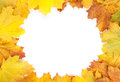 Colorful autumn maple leaves frame isolated on white background Stock Images