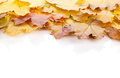 Colorful autumn maple leaves frame isolated on white background Stock Photos