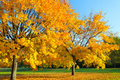 Colorful autumn maple tree Royalty Free Stock Image