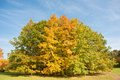 Colorful autumn natural autumnal background tree foliage beautiful trees in the park in Stock Image