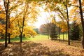 Colorful autumn natural autumnal background tree foliage beautiful trees in the park in Stock Photos