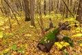 Colorful autumn nature. Forest landscape