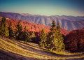 Colorful autumn panorama of the mountains glade brailka carpathian ukraine europe Royalty Free Stock Photos
