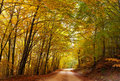 Colorful autumn path Royalty Free Stock Photo