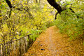 Colorful autumn path background fallen tree leaves Royalty Free Stock Images