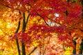 Colorful Autumn, Red, Orange A...