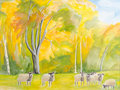 Colorful autumn sheep-run Royalty Free Stock Images