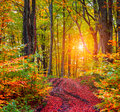 Colorful autumn sunrise in dark mountain forest. Royalty Free Stock Photo