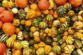 Pumpkins of all color and size in rural Austria Royalty Free Stock Photo