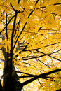 Colorful Autumn Tree Stock Photos