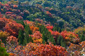 Colorful autumn trees in the golden Royalty Free Stock Image
