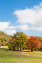 Colorful autumn trees vivid red and yellow colored on a mountain meadow under the blue sky Royalty Free Stock Image