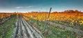 Colorful autumn vineyard in Carpathian mountain,Bratislava ,Pezinok, Slovakia