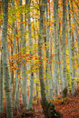 Colorful autumn woods Royalty Free Stock Images
