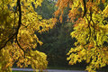 Colorful Autumnal foliage Stock Images