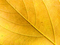 Colorful background of autumn leaf use for Royalty Free Stock Photography