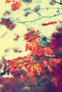 Colorful background of autumn leaf Royalty Free Stock Photo