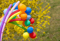 Colorful balls on a background forsythia flowers Stock Photo