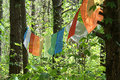 Colorful banners hanging in trees blank Stock Image