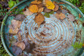 Colorful bird bath with spiral design from above and fall leaves Stock Photography