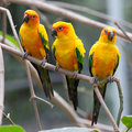 Colorful birds close up perching on tree Royalty Free Stock Images
