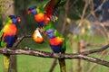 Barvitý ptactvo bojování jídlo
