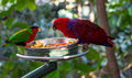 Colorful Birds Royalty Free Stock Photo