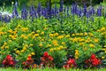 Colorful blooming flower garden red yellow and blue Stock Photos