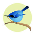 Colorful blue bird on a branch, side profile. Exotic fauna.