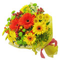 Colorful bouquet from gerbera flowers isolated on white backgrou background closeup Stock Photo