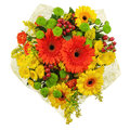 Colorful bouquet from gerberas isolated on white background closeup Royalty Free Stock Photos