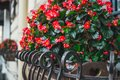 Colorful flower pot with red begonias. Colorful autumn in the city Royalty Free Stock Photo