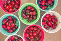 Colorful buckets with fresh cherries top view ripe on wooden background Royalty Free Stock Image