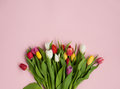 Colorful bunch on pink background
