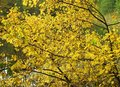 Colorful bush in autumn Royalty Free Stock Photo