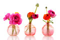 Colorful butter cups in glass vases Royalty Free Stock Photo