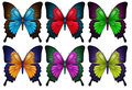 Colorful butterflies illustration of the on a white background Royalty Free Stock Images