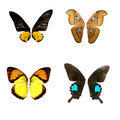Colorful butterflies still life business Royalty Free Stock Photo