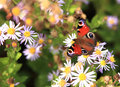 Colorful butterfly and flowers Royalty Free Stock Photography
