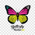 Colorful Butterfly illustration vector collection