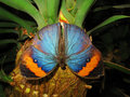 Colorful butterfly on plant Stock Images