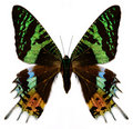 Colorful butterfly on white Royalty Free Stock Photo