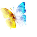 Colorful butterfly white background Royalty Free Stock Image