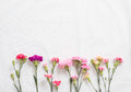 Colorful carnations flowers Royalty Free Stock Photo
