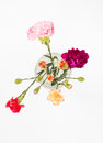 Colorful carnations in glass Royalty Free Stock Photo