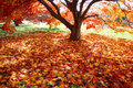 Colorful carpet of fallen leaves Royalty Free Stock Photo