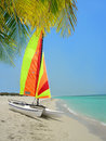Colorful catamaran and palm tree on beach Royalty Free Stock Photos