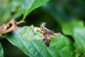 Colorful caterpillar on leaf