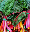 Colorful Chard Royalty Free Stock Photo
