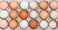 Colorful chicken eggs assortment of different color fresh in a gray tray Royalty Free Stock Images